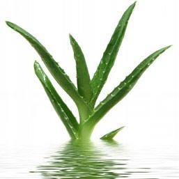 love aloe-vera lube ferosup 18